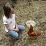 Ein Mädchen mit braunen langen Haaren kniet in einem Hühnerstall vor einem braunen Huhn. Im Hintergrund ist der Futternapf zu sehen.