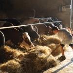Bauernhofcamp mit Rundumbetreuung in Rothenburg