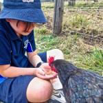 Ein Junge sitzt im Schneidersitz auf einer Wiese. Er hält Futter in seinen beiden Händen. Ein schwarzes Huhn pickt Futter aus seinen Händen.