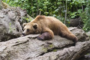 bear-1383980__340