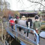 Reitfreizeit mit FFA - Ausflug mit den Ponys