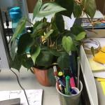 Réka ist auch Pflanzenmutti!